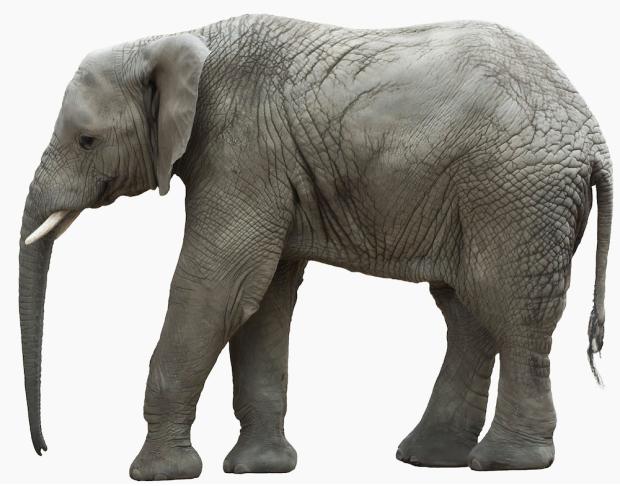 """Elephant"""